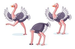 Set of ostriches in different poses. Cute bird on a white background in cartoon style. Vector illustration on a children`s theme Stock Images