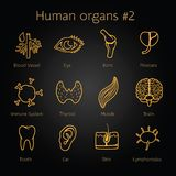 Set of otlines yellow icons with human organs Royalty Free Stock Photo