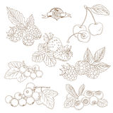 Set of Outline hand drawn berries ( blackberry, cherry, strawber Royalty Free Stock Photography