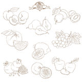 Set of Outline hand drawn fruits with leaves( apple, pear, apric Royalty Free Stock Photos