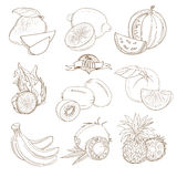 Set of Outline hand drawn fruits with leaves ( mango, lemon, wat Royalty Free Stock Image