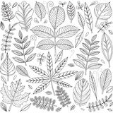 Set of outline leaves Royalty Free Stock Photography