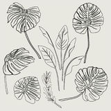 Set of outline tropical leaves, and floral elements on white ba Royalty Free Stock Photo