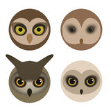 Set of Owl Heads Stock Photo