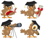 Set owl Royalty Free Stock Photos