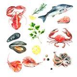 Set owoce morza akwarela Obrazy Stock