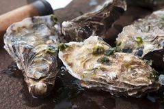 Set of oyster stock photography