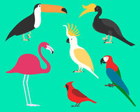 Set płascy ptaki, odizolowywający na tle różni tropikalni i domowi ptaki, kreskówka stylowi prości ptaki dla logów royalty ilustracja