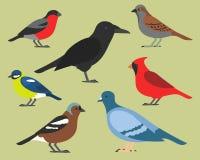 Set płascy ptaki, odizolowywający na tle różni tropikalni i domowi ptaki, kreskówka stylowi prości ptaki dla logów ilustracji