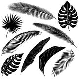 Set of Palm Leafs Stock Image