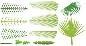 Set of palm leaves Royalty Free Stock Images