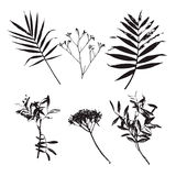 Set of palm leaves and different flowers silhouettes isolated on white background. Vector illustration. Real printed leaves and flowers Stock Images