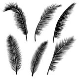Set of palm leaves silhouettes. Isolated on white background Stock Image