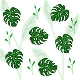 Set of palm leaves silhouettes isolated on white background Stock Images