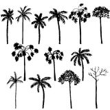 Set of palm tree silhouettes Royalty Free Stock Image