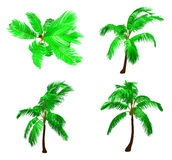 Set palm tree. Vector Royalty Free Stock Images