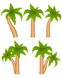 Set of palm trees Royalty Free Stock Photography