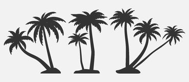 Set of palm trees silhouettes. Stock Photo