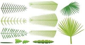 Set Palmblätter Lizenzfreie Stockbilder