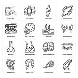 Set of Pancreas, Fertilization, Dishes Stack, Human Cerebellum, Big Nose, Men Knee, Teeth, Bones Joint, Skin icons. Set Of 16 simple  icons such as Pancreas Stock Photography