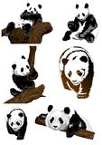 Set pandas (vector). Royalty Free Stock Images