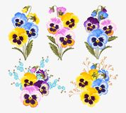 Set of pansy bouquets Stock Images
