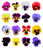 Set of 16 pansy flowers Stock Photo