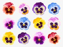 Set of pansy flowers Stock Images