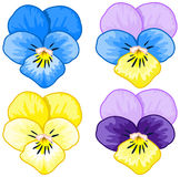 Set of Pansy Royalty Free Stock Images