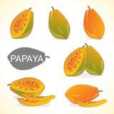 Set of papaya fruit in various styles vector format Stock Photo