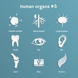 Set of paper icons with human organs and systems Royalty Free Stock Photography