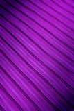 Blur of mauve lines Royalty Free Stock Photography