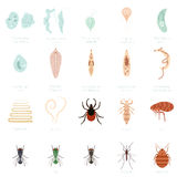 Set of parasites Stock Photography