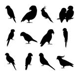 Set of parrot silhouette icons in flat style Royalty Free Stock Images