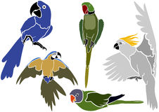 Set of Parrots Icons Royalty Free Stock Image