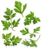 Set with parsley leaves isolated on white background Royalty Free Stock Photo