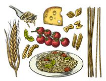Set pasta with tomato branch, cheese, ear of wheat. Vector vintage color illustration  on white background Stock Images