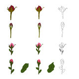Set of patterns of a bud of a tulip. Set of patterns of a red bud of a tulip Stock Photo