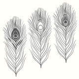 Set of peacock feathers  isolated on white background. Hand draw Royalty Free Stock Image