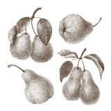 Set of  pears Stock Photos
