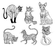 Set of Pedigree cats. Kittens collection. Icons of vector Illustration, line art. Hand drawn Pets. Engraved vintage stock illustration