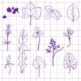 Set of pencil drawing herbs and leaves Stock Photos