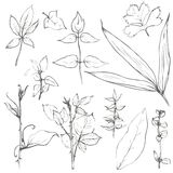 Set of pencil drawing herbs and leaves Royalty Free Stock Photos