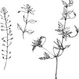 Set of pencil drawing herbs and leaves Stock Photography