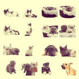 Set of pet Royalty Free Stock Photography