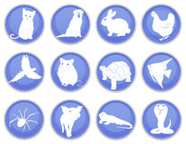 Set of pet icons Stock Image