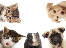 Set of pet looking Royalty Free Stock Photo