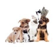 Set pet looks Royalty Free Stock Photos