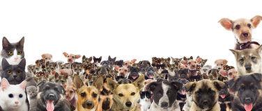 Set of pet watching Royalty Free Stock Images
