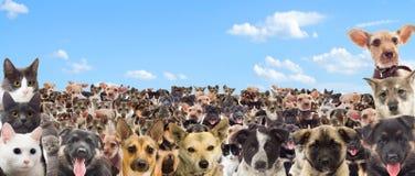 Set of pet watching Stock Images